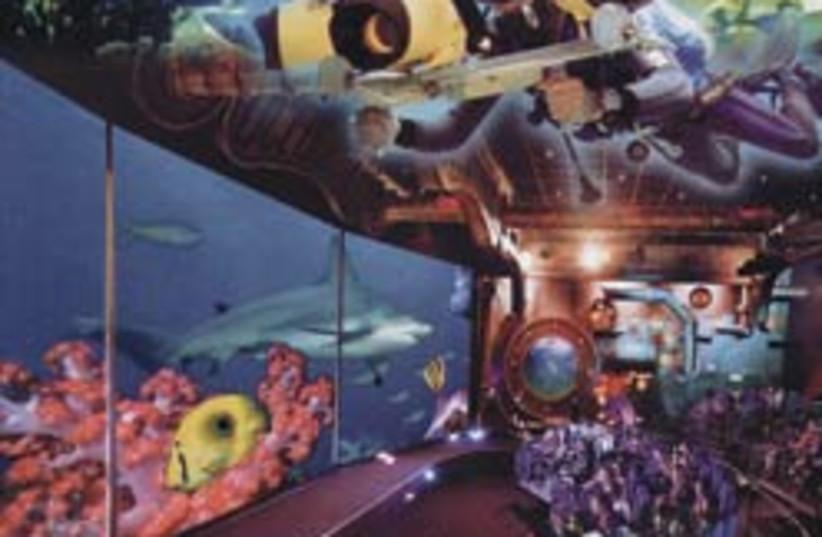 oceanarium 88 248 (photo credit: Courtesy)
