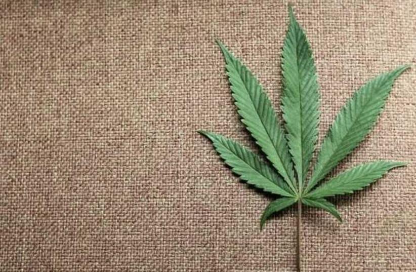 A marijuana leaf (photo credit: REUTERS)