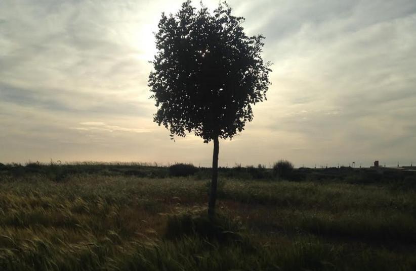 Tree at Park Ariel Sharon (photo credit: NATHAN WISE)