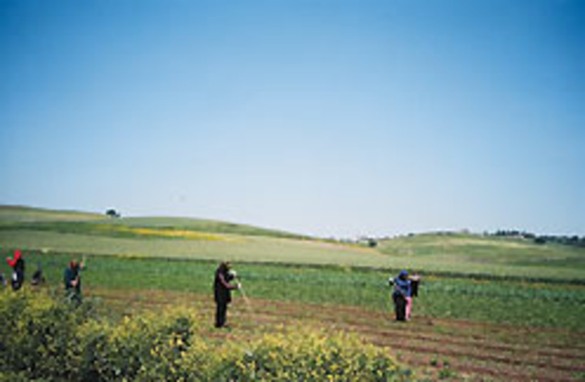 field workers 88 248 (photo credit: Sonia Moukhtar)