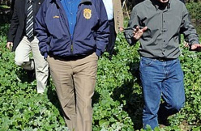 Olmert strawberry fields 248 88 (photo credit: GPO)