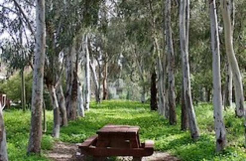 kkl trees  (photo credit: )