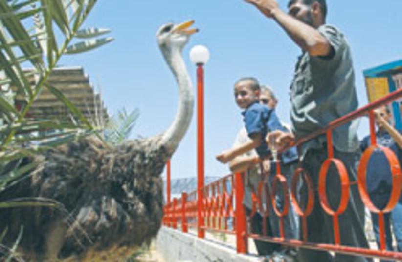 ostrich 88 248 (photo credit: )