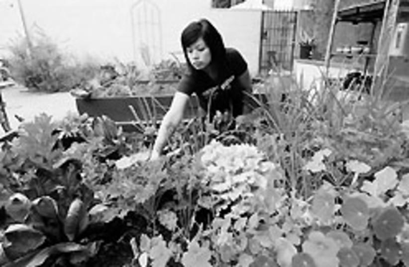 home gardening 88 248 (photo credit: )