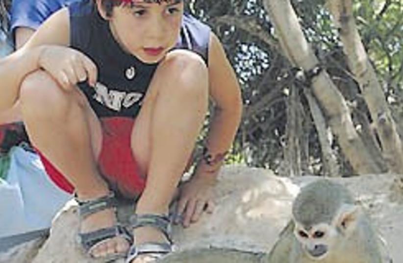 monkey kid 248 (photo credit: courtesy)