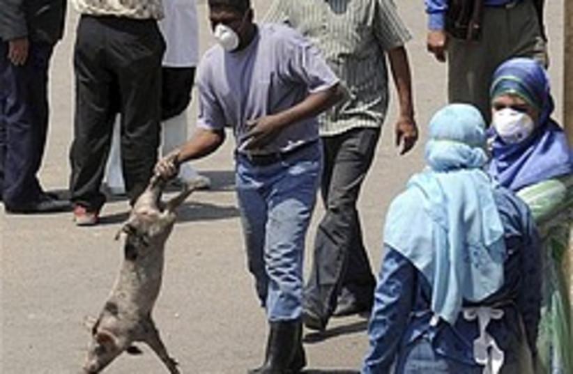 egypt pig swine flu 248 88 ap (photo credit: AP)