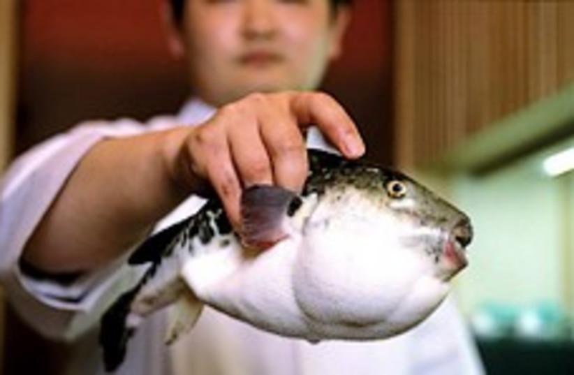 blowfish 248.88 (photo credit: Courtesy)