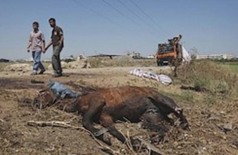 Gaza attack horse 248.88 (photo credit: AP)