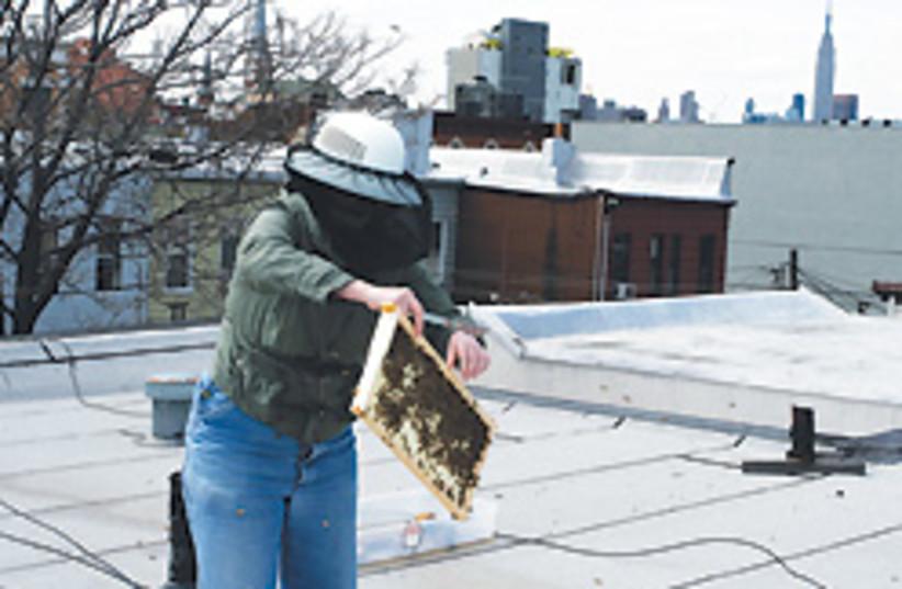 beekeeper 88 248 (photo credit: )