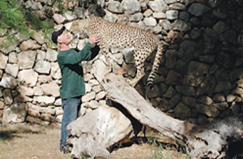 kissing cheetah 88 248 (photo credit: Stuart Winer)
