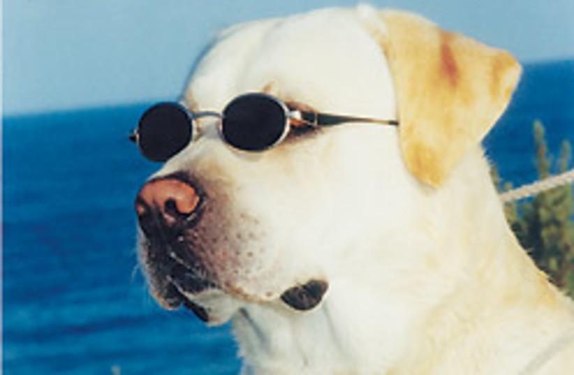 dog with sunglasses 88 248 (photo credit: Courtesy)