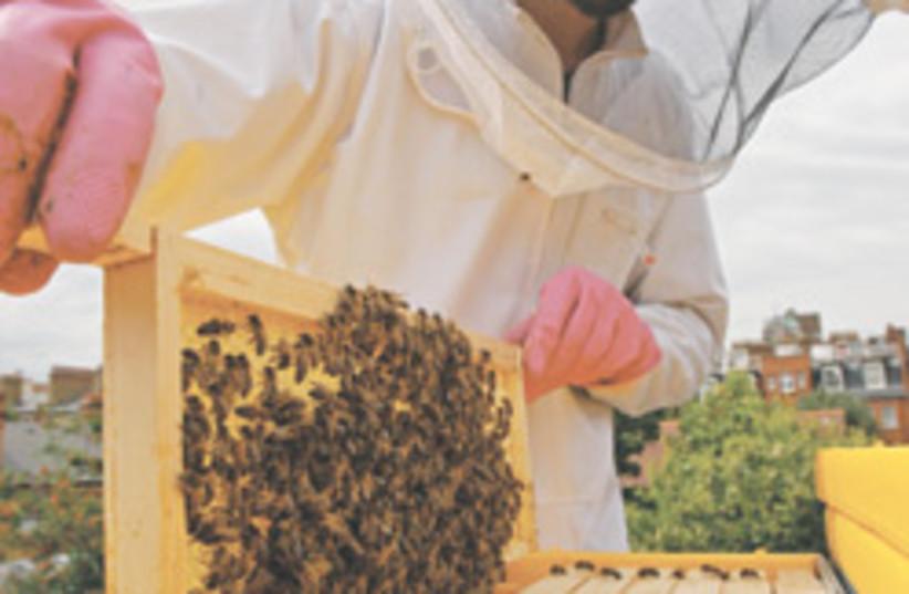 bees 88 248 (photo credit: )