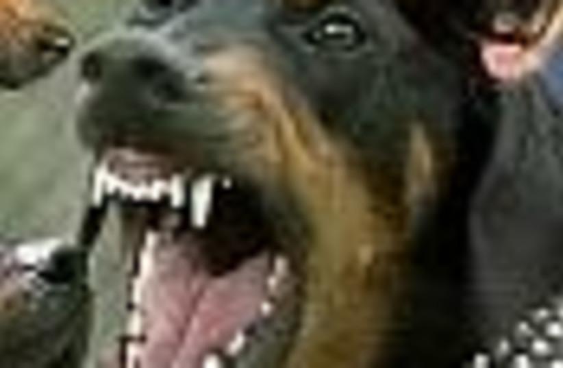 attack dog 88 (photo credit: )
