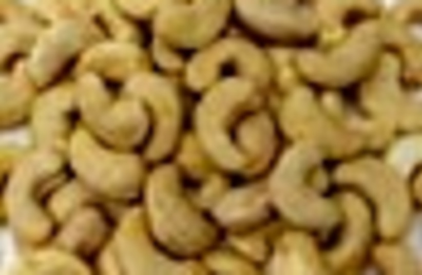 cashews 88 (photo credit: )