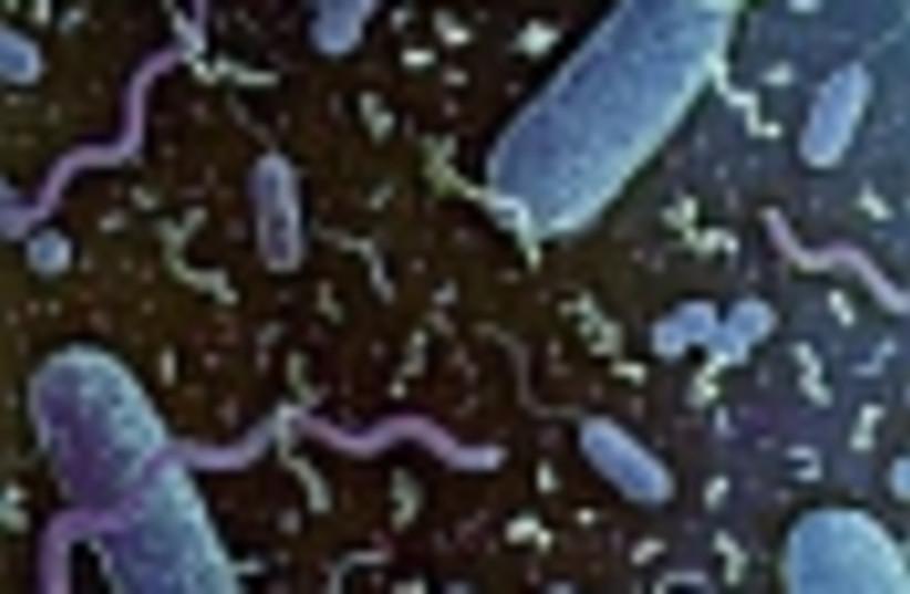 bacteria 88 (photo credit: )