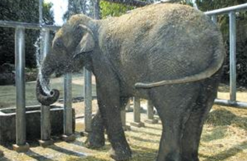 elephant 88.298 (photo credit: )