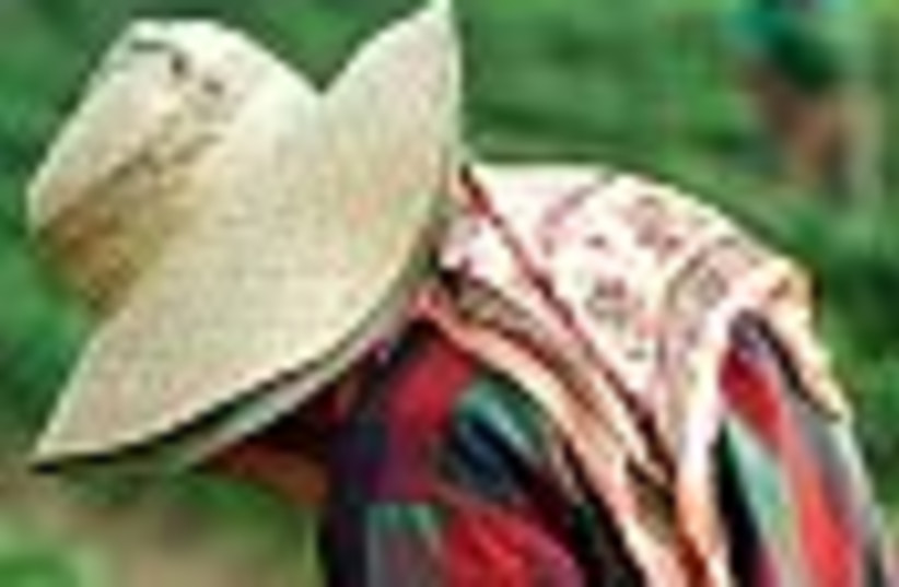 migrant worker farmer 88 (photo credit: )