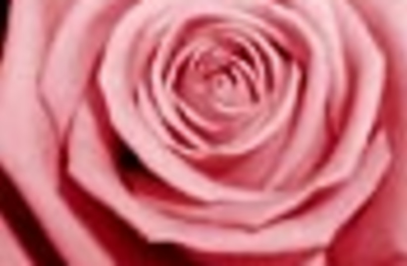 rose 88 (photo credit: )
