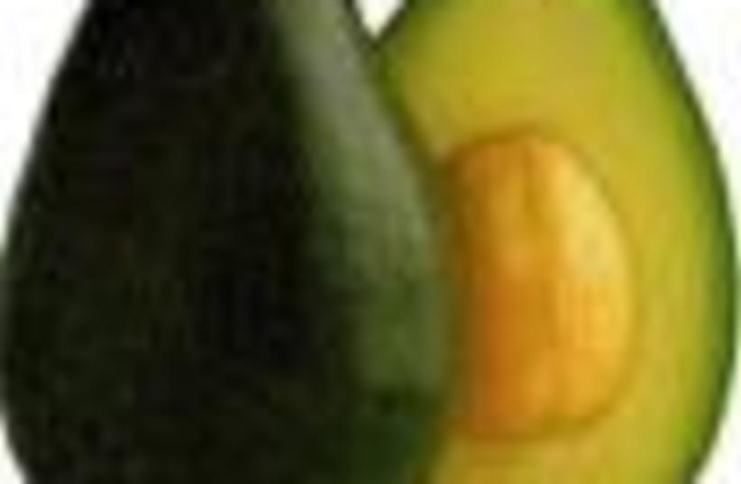 avocado 88 (photo credit: )