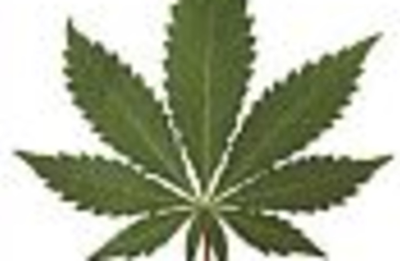 marijuana leaf 88 (photo credit: )