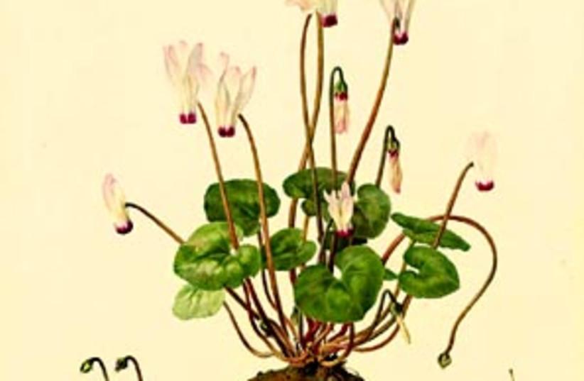 flower art 88 298 (photo credit: )