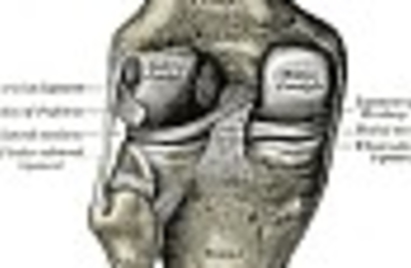 knee joint 88 (photo credit: )