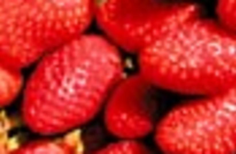 strawberries 88 (photo credit: )