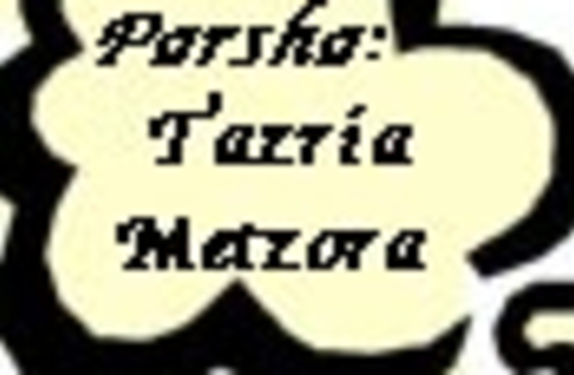 tazria metzora 88 (photo credit: )