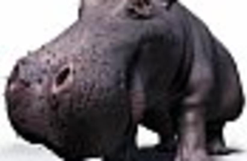 hippo 88 (photo credit: )