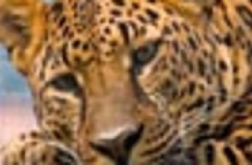 leopard 88 (photo credit: )
