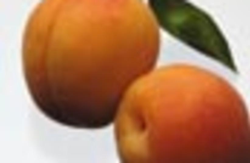 apricots 88 (photo credit: )