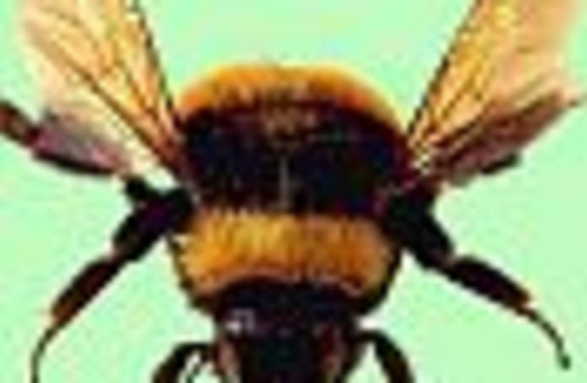 bumble bee 88 (photo credit: )