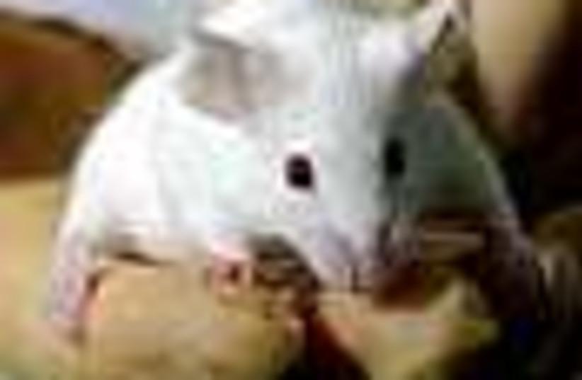 mouse 88 ap (photo credit: )