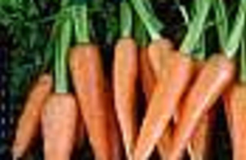 carrots 88 (photo credit: )