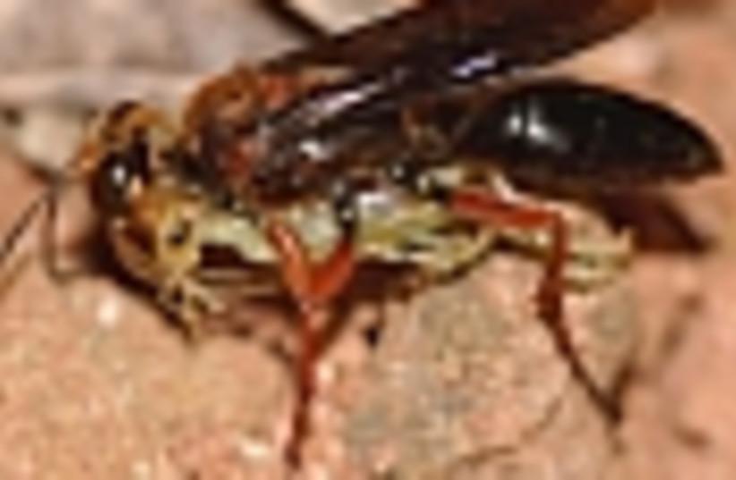 wasp 88 (photo credit: )