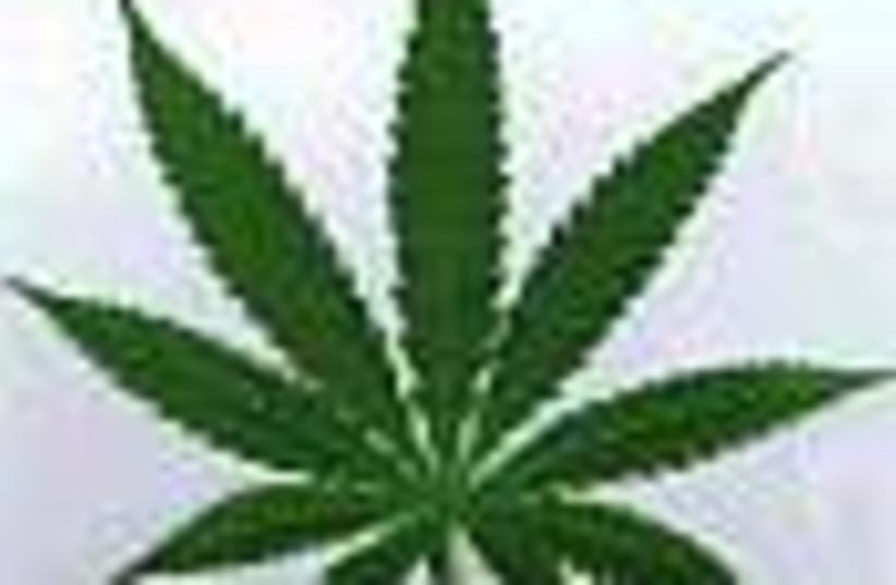 marijuana 88 use (photo credit: )