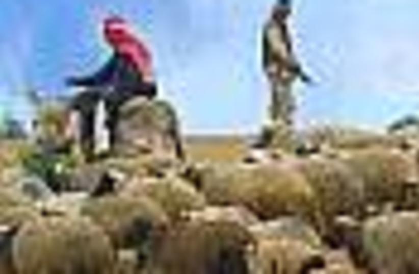 iraq shepherd 88 (photo credit: )