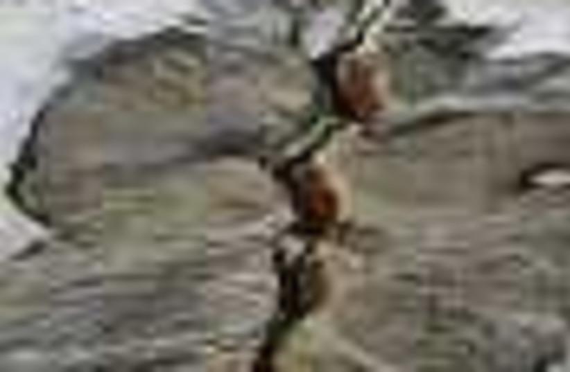 earthquake 88 (photo credit: )