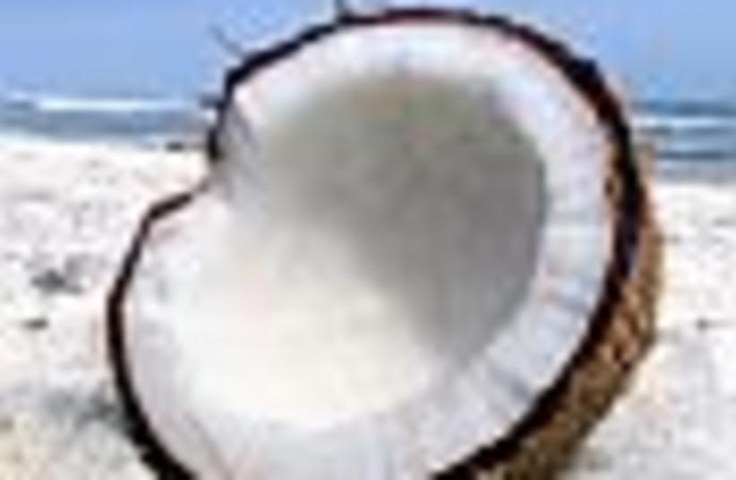 coconut 88 (photo credit: )