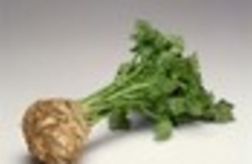 celery root 88 (photo credit: )