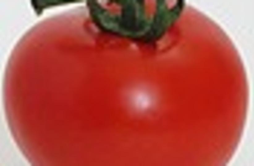 tomato 88 (photo credit: )