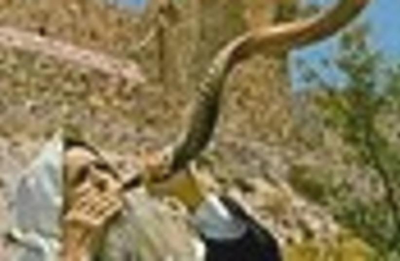 shofar 88 (photo credit: )