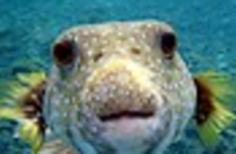 fish 88 (photo credit: )