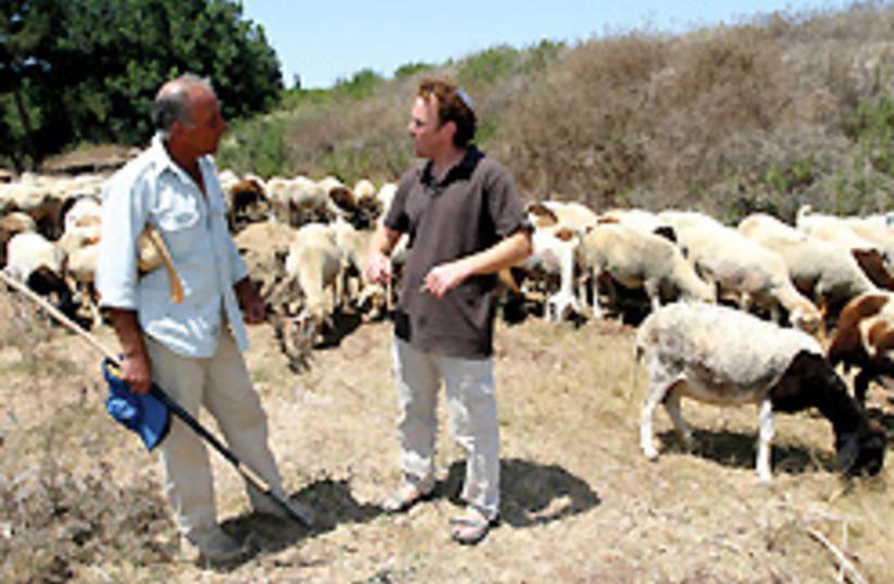 shepherd kibbutz hanaton 248.88 (photo credit: Ariel Jerozolimski)