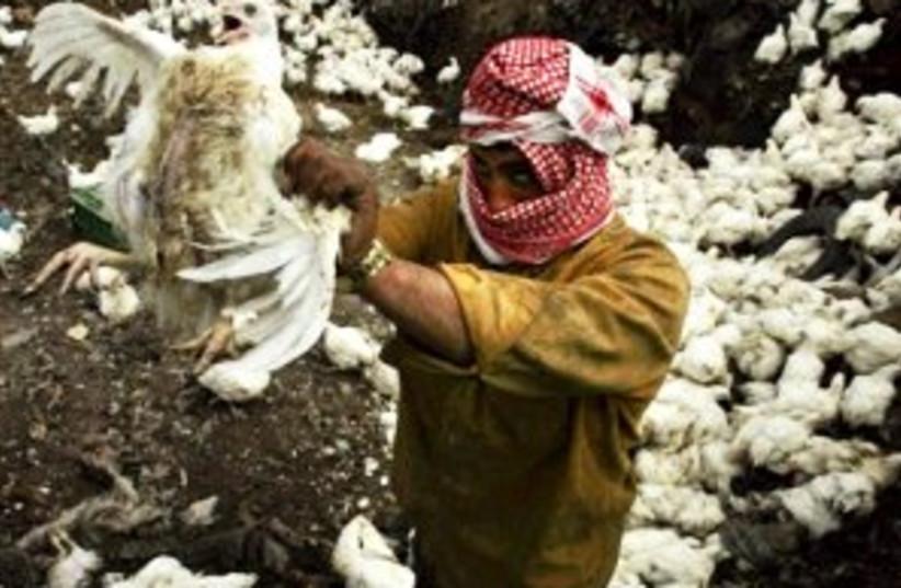 Gaza bird flu 88.298 (photo credit: AP)