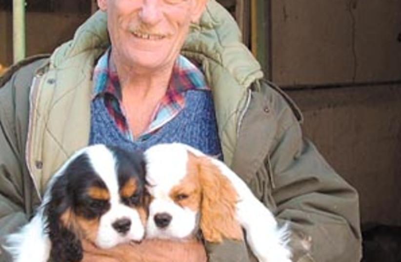 dog breeder 88 298 (photo credit: )