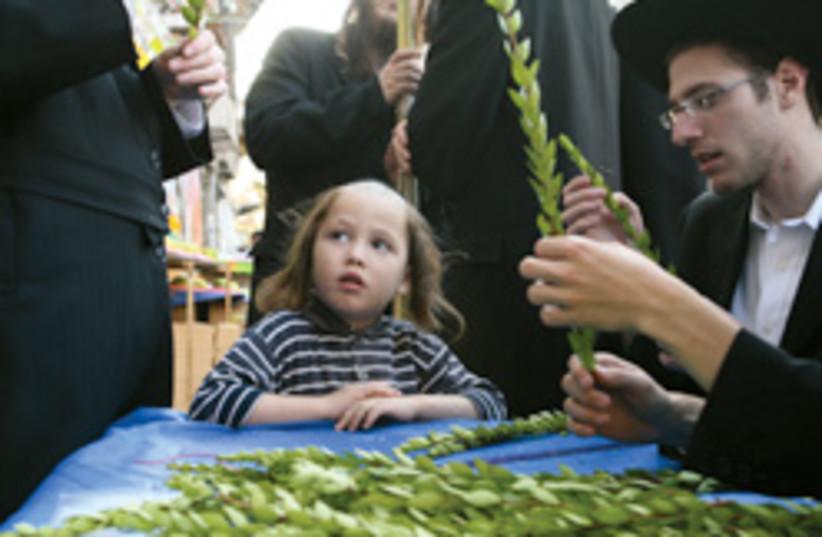 myrtle willow 248.88 (photo credit: Ariel Jerozolimski)