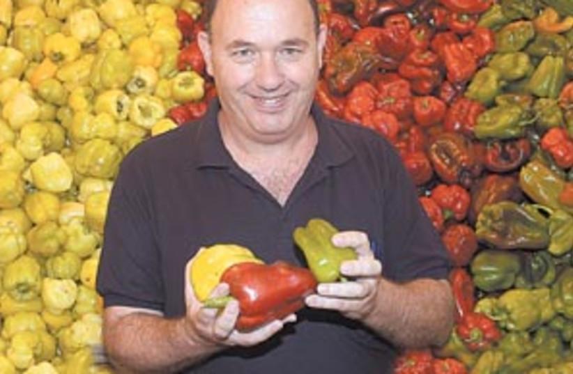 hybrid peppers 88 298 (photo credit: Courtesy Hebrew University/Eyal Fischer)