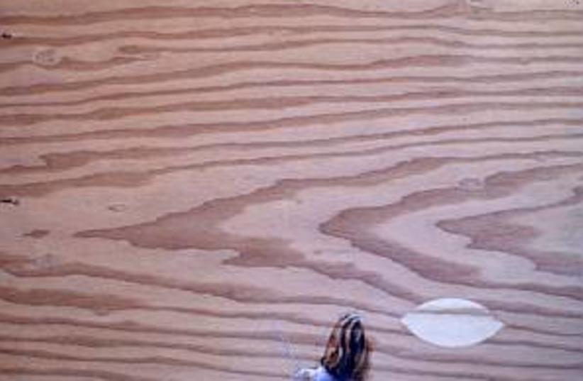 plywood 298.88 (photo credit: )