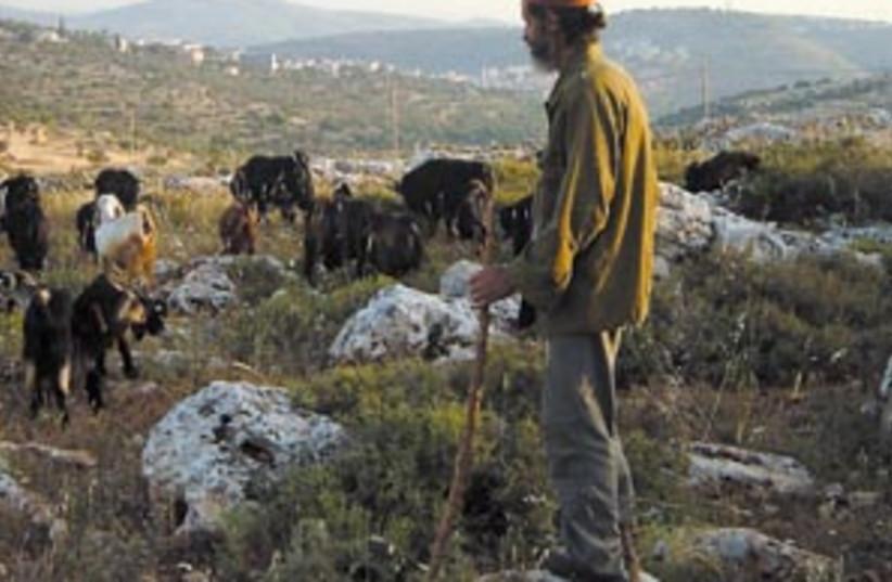 shepherd 88 298 (photo credit: Zev Stub)